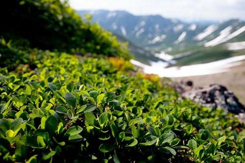 كامشاتكا الساحرة Kamchatca11.jpg