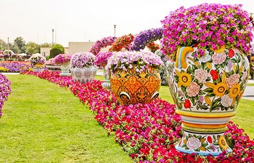 ميراكل جاردن» أعجوبة وردية في دبي
