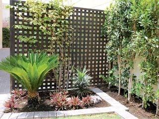 المقال كامل نخيل السايكس يمنح مكونات الحديقة الثراء