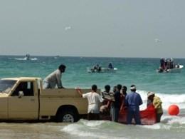 الأسماك قديماً الخليج