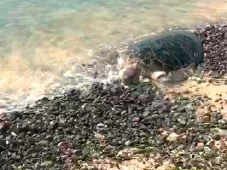 اخبار الامارات العاجلة m46 «الضغوة»  تقضي على أسماك وسلاحف نادرة في رأس الخيمة اخبار الامارات  الامارات