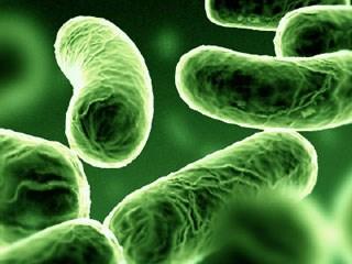 تقوم بكتيريا بتحويل الذهب السائل إلى